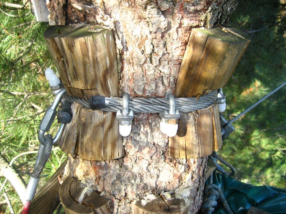 mantenimiento árboles parque de aventura forestal