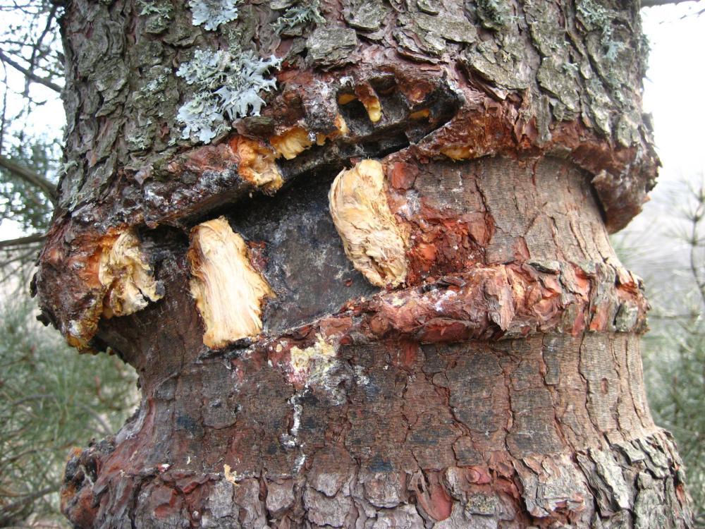 mantenimiento árboles de parque de aventura forestal